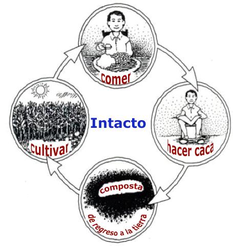 ciclo intacto
